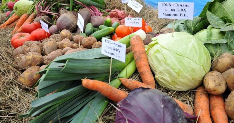 Сельхозпроизводители региона и города выходят на Магаданскую площадь