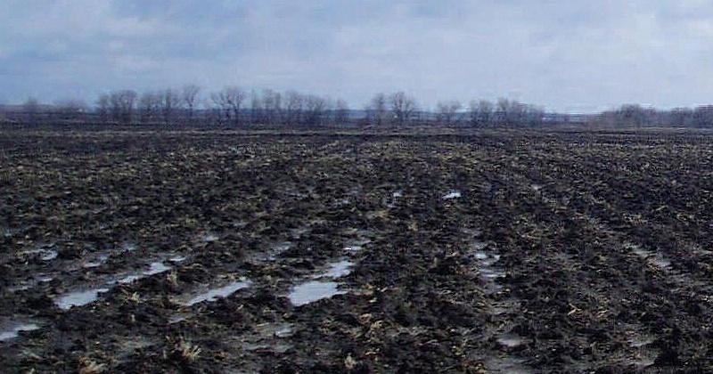 Россельхознадзор выявил новые участки заброшенной сельскохозяйственной земли