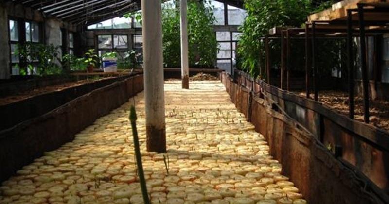 Лук выращивают сидельцы в магаданской колонии строго режима