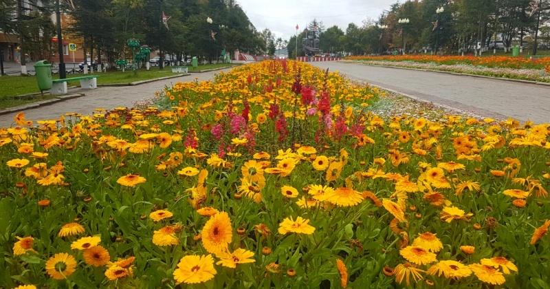 Порядка 160 тысяч цветов высадили этим летом в клумбы и вазоны Магадана