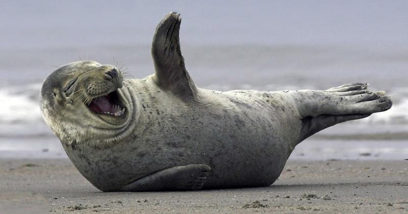 Встать на защиту морских млекопитающих  призывают магаданцев