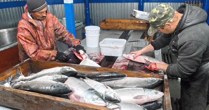 Поставщикам рыбы на внутренний рынок могут дать налоговые льготы