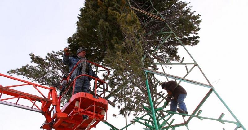 Зеленых красавиц к Новогодним торжествам начал заготавливать Магаданский городской лесхоз