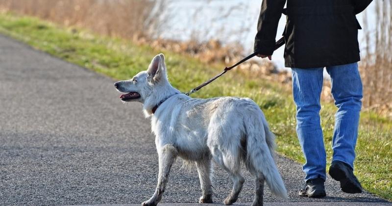 Штраф будет платить магаданцы за выгул собак в запрещенных местах