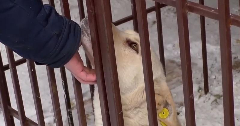 Жителей колымской глубинки ограждают от опасных бездомных собак