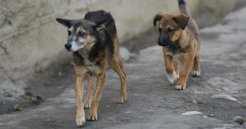 В Магаданской области на протяжении всего периода наблюдения случаев заболеваний бешенством среди животных и людей не регистрировалось