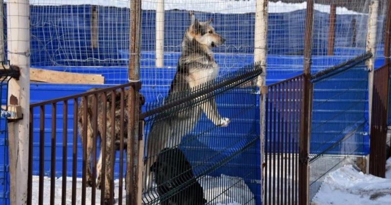 В Магадане определили место под строительство приюта для бездомных животных