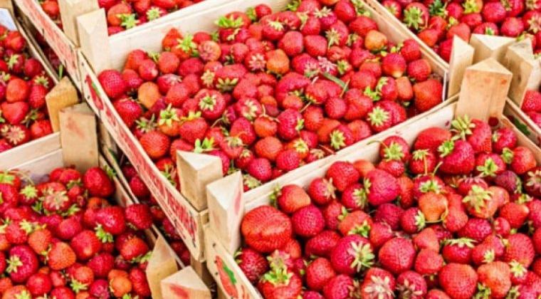 Сорок четыре тонны клубники и черешни завезли в Магадан