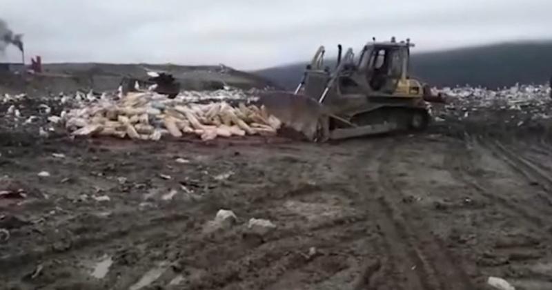 Почти 90 тонн красной рыбы уничтожили в этом году в Магадане по требованию «Россельхознадзора» (Видео)