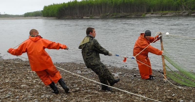 Магаданской области выделили дополнительно 3600 тонн для вылова тихоокеанских лососей