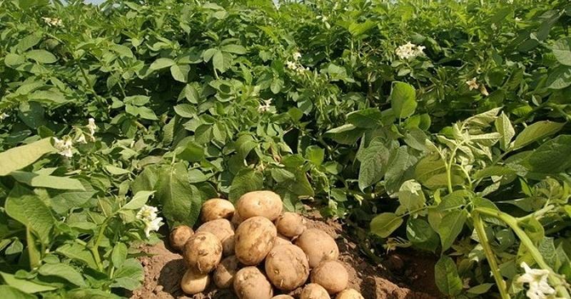 Из-за аномальной погоды магаданские фермеры и дачники теряют урожай
