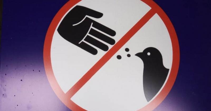 Сторону магаданской мэрии о запрете кормления голубей поддержал Геннадий Онищенко